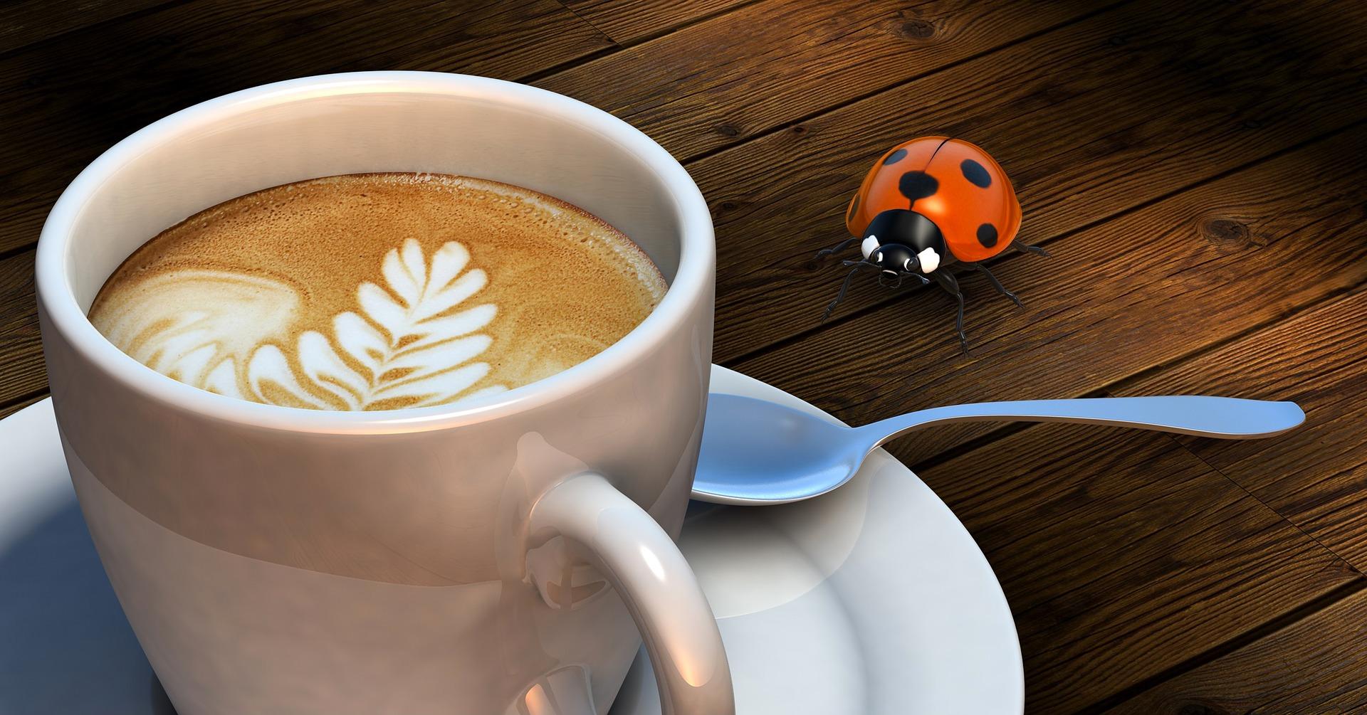 Benutztes Kaffeepulver soll Palmöl ersetzen