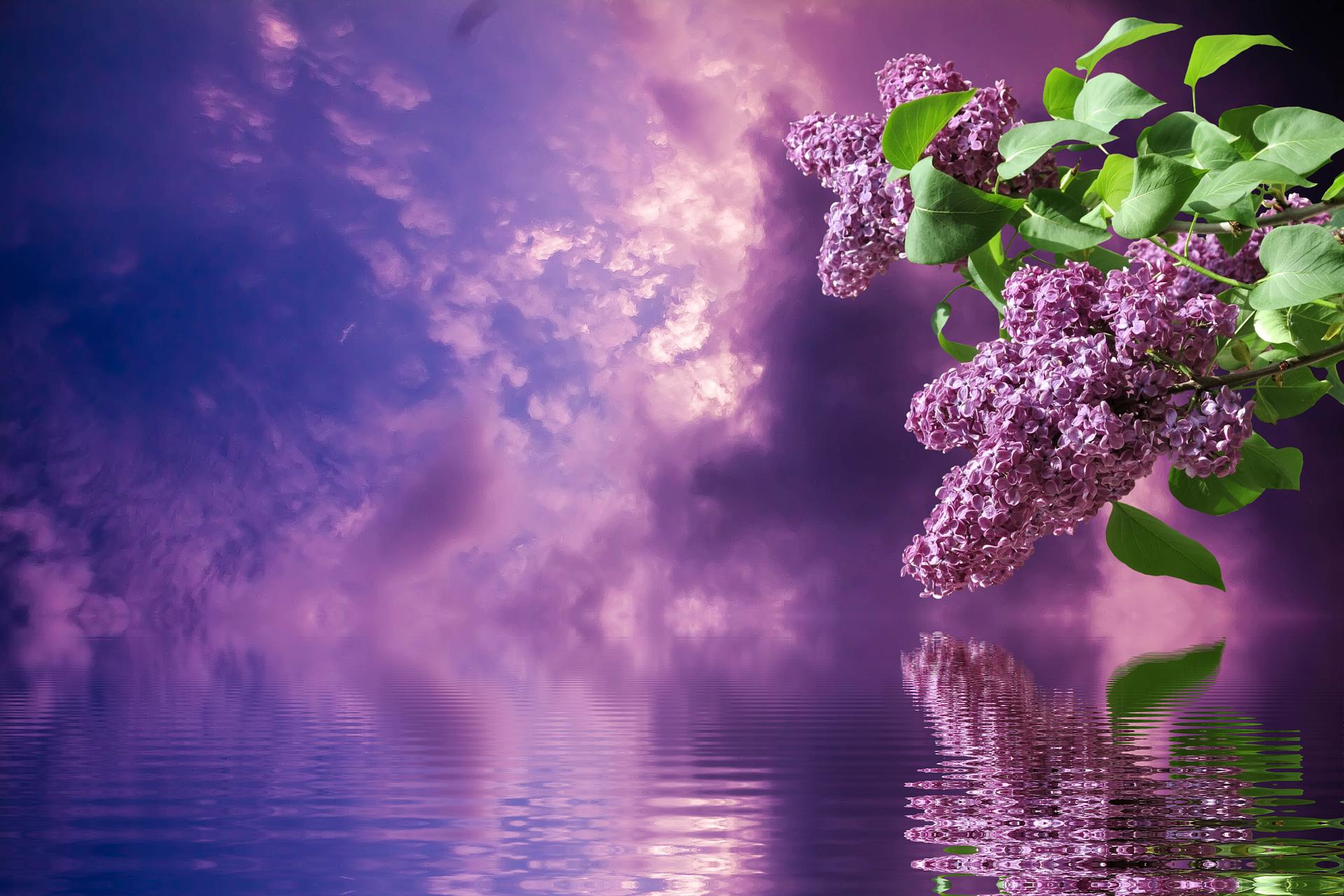 Lila ist Farbe des Jahres – violette Schwemme im Container?